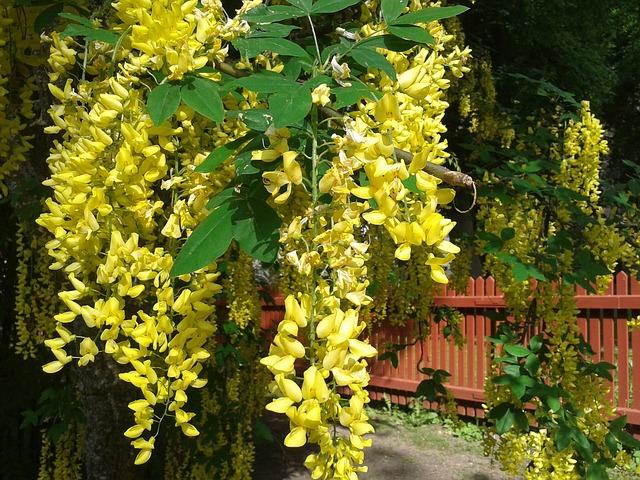 Planten In Tuin : Kinderen? geen giftige planten in je tuin! website4mama.nl